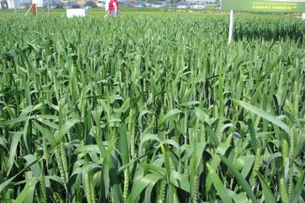 Prognoza rynku zbóż na sezon 2010/2011