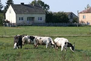 40 proc. rolników dostało dopłaty bezpośrednie