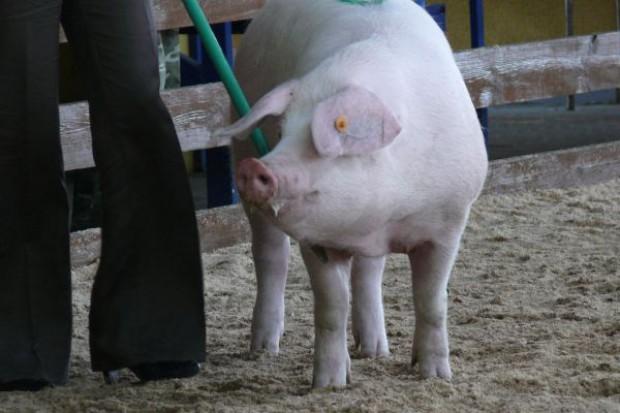 Będzie interwencja na rynku wieprzowiny