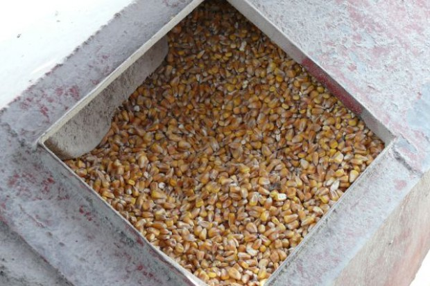 Spekulacje na rynku kukurydzy