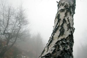 Zostawcie lasy