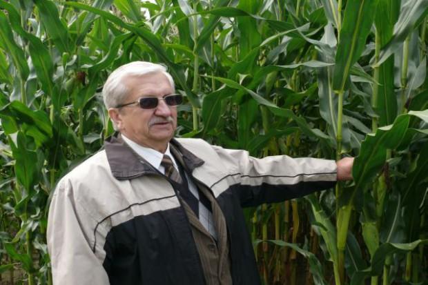 Mróz zagroził niektórym plantacjom kukurydzy