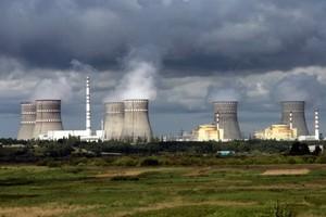 Fukushima: konieczna likwidacja stad zwierząt