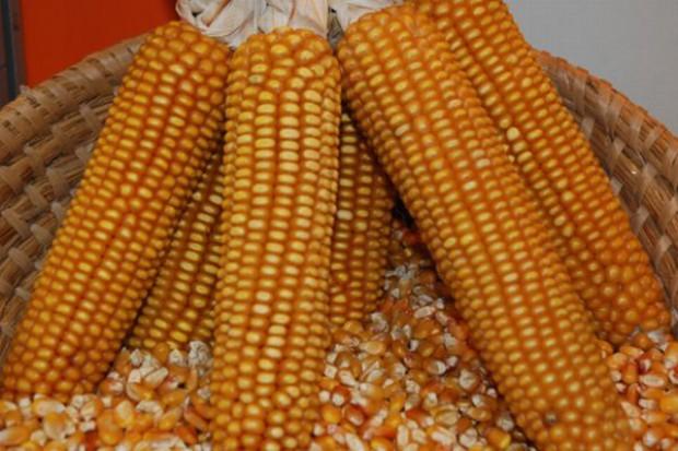 Odstępstwo rolne, czyli co w prawie piszczy