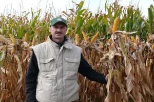 Wzmocnij kukurydzę po przymrozkach