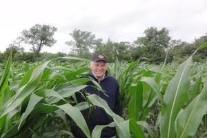 Pogoda dla kukurydzy