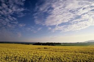 Niskie zapasy zbóż na świecie