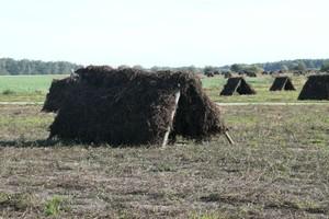 Wzrasta popyt na ekologiczne surowce zielarskie