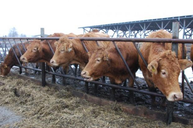 Innowacyjne podejście do produkcji wołowiny