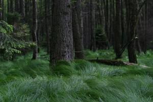 Zmiany w dotacjach dot. leśnictwa