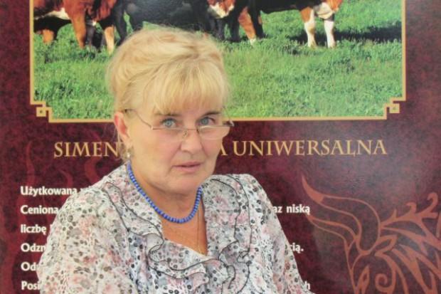 Choroszy: Są prezydspozycje do produkcji wołowiny kulinarnej