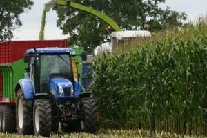 Parametry dla kukurydzy kiszonkowej