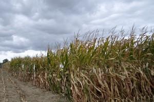 Nowa ustawa o nasiennictwie bez GMO