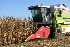 Kończą się kukurydziane żniwa