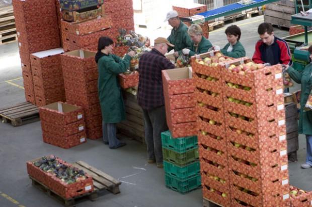 Słabnie wsparcie dla grup producentów owoców i warzyw