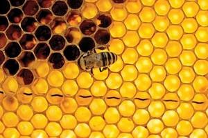 500 tys. zł VAT dla pszczelarzy