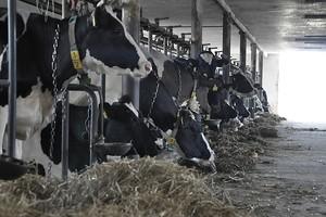 Od kwoty mlecznej trzeba zapłacić PIT