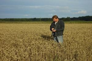 Importujemy coraz więcej ziarna zbóż