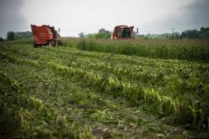 Jak GMO zachowa się na polskich glebach