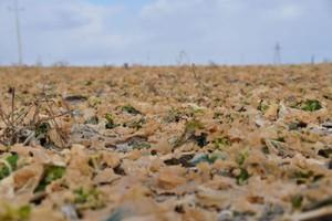 Ta zima pokazała siłę odmian