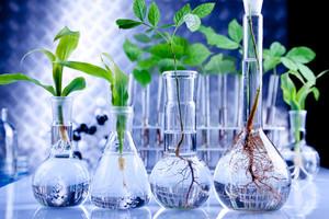 Dylematy związane z debatą o korzyściach i zagrożeniach GMO