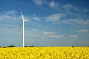 Bardziej potrzebne biogazownie czy wiatraki