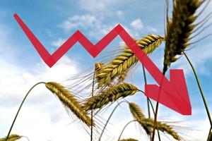 Spadki cen surowców rolnych