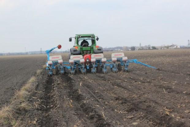 Kukurydza już wysiewana