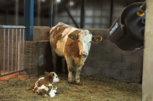 Nowy system monitoringu zwierząt