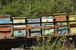 UE wszczyna dochodzenie ws. pszczół