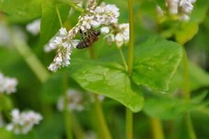 Pszczelarze czekają na informacje MR