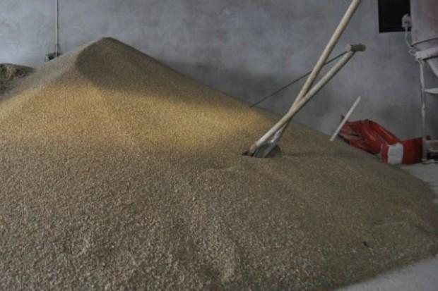 1000 zł za tonę pszenicy konsumpcyjnej