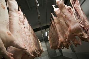 BGŻ: Spadnie liczba ubojów świń w UE