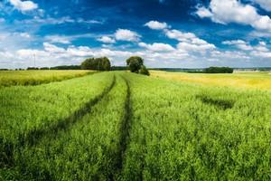 Sprawdź ekologicznych rolników