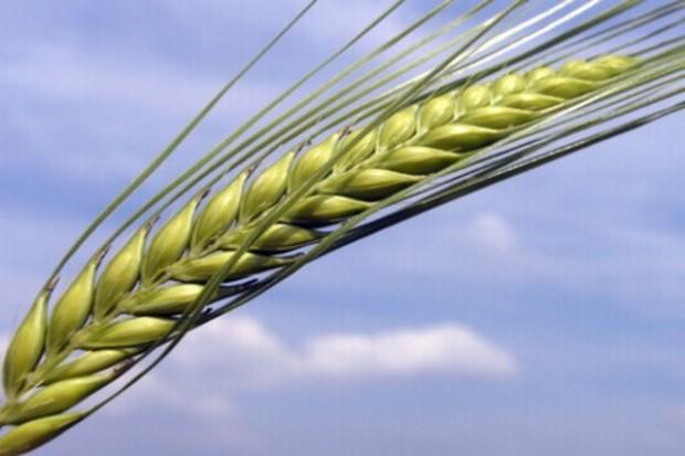 Pozytywne informacje z plantacji nasiennych