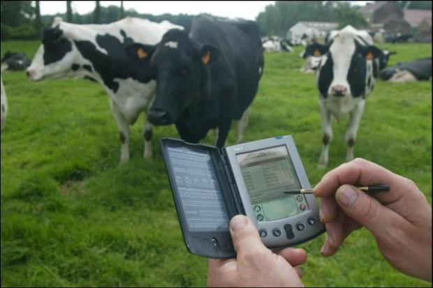 Dobrostan krów krok po kroku. Cz. I: Prawidłowe żywienie
