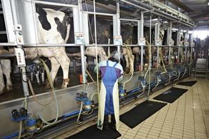 KE prognozuje wzrost cen mleka