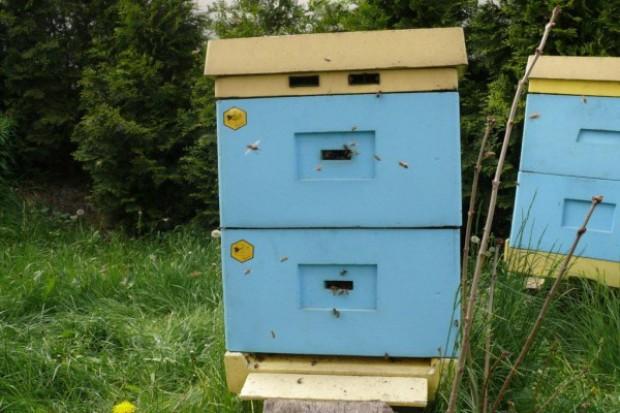 Pszczelarz wciąż czeka na informacje od ministra rolnictwa