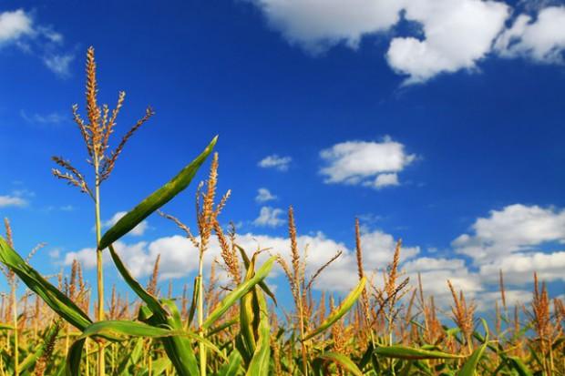 Obiektywna ocena GMO wymaga badań socjo-ekonomicznych