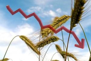 Obniżki cen zbóż