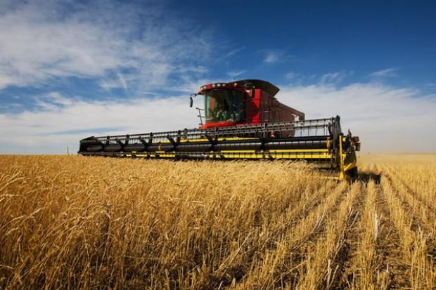 Wysokie zbiory zbóż w Niemczech