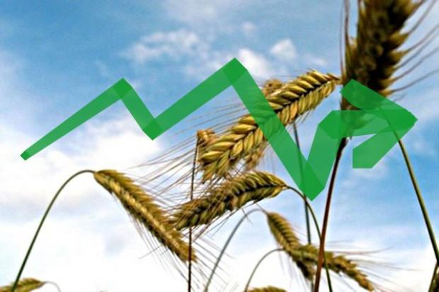 Przetasowania na rynku zbóż
