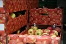 Udany kongres eksporterów jabłek