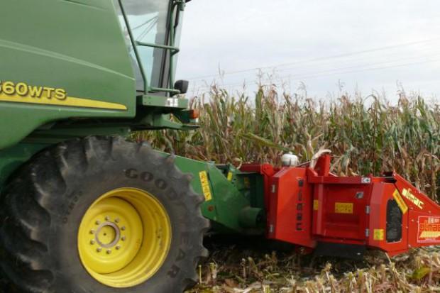 Kukurydza mokra kosztuje 500 zł/t
