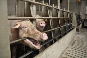 Nawet 9 tys. euro kary za kojce pojedyncze dla loch
