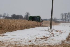 Wyższa wilgotność nasion zbieranych później