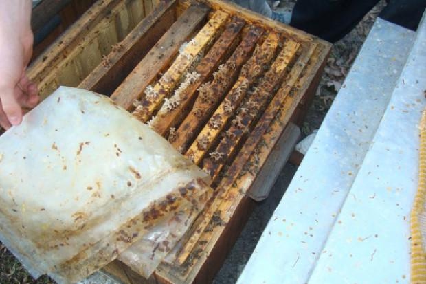 Dlaczego uciekają pszczoły?