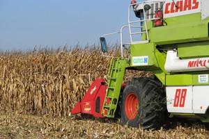 Rolnicy czekają ze zbiorem kukurydzy w nadziei na wyższe ceny