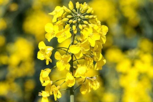 Ochrona podczas kwitnienia