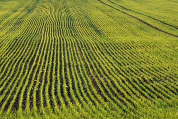 W Polsce są 373 gospodarstwa posiadające ponad tysiąc ha